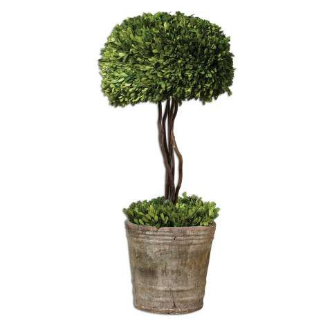 Uttermost 60095 Preserved Boxwood - Tree Topiary